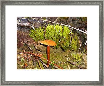 Mushroom Microcosm Framed Print by Jim Thomson