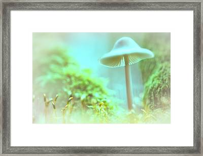 Framed Print featuring the photograph Mushroom Misty Dreams, Mycena Galericulata by Dirk Ercken