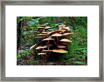 Mushroom Photography In Stanley Park 6 Framed Print