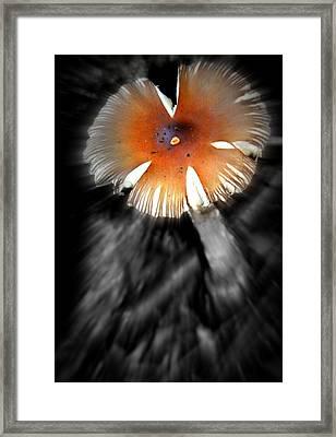Mushroom Framed Print by Rick DiGiammarino