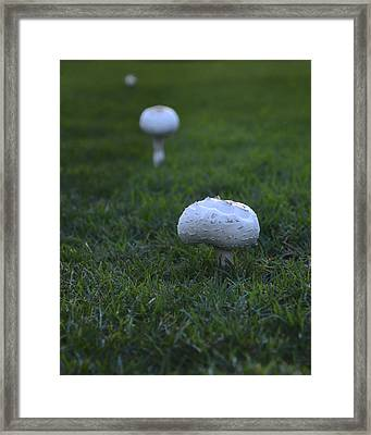 Mushroom Row Framed Print