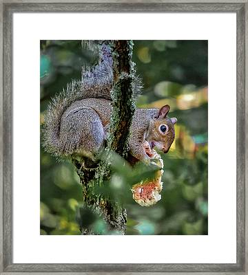 Framed Print featuring the photograph Mushroom Treat by Norman Peay