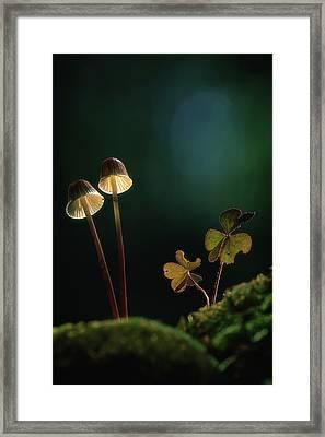 Mushroom Twins Framed Print