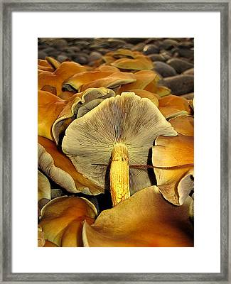 Framed Print featuring the photograph Mushroom Two by John King
