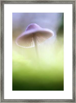 Framed Print featuring the photograph Mushroom Ufo by Dirk Ercken