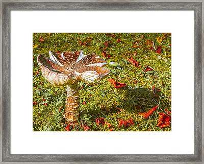 Mushroom Upclose Framed Print