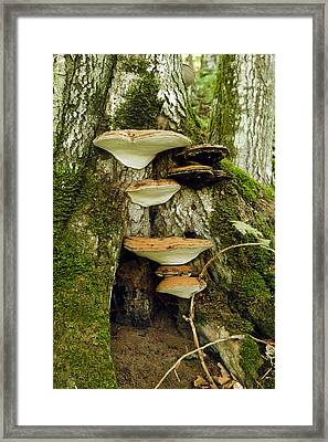 Mushroom Village Framed Print by James Steele
