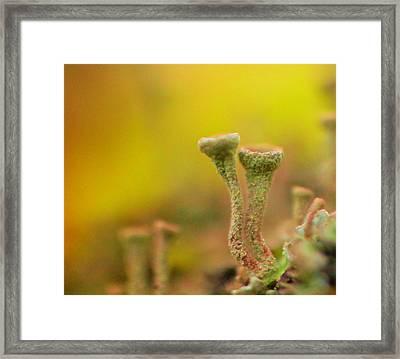 Mushroom World Framed Print by Jeff Swan