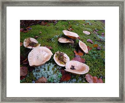 Framed Print featuring the photograph Mushrooms And Moss by Francine Frank