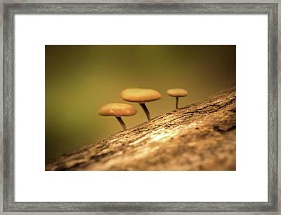 Mushrooms Framed Print by Art Spectrum