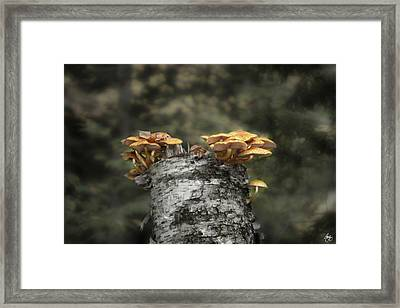 Mushrooms Atop Birch Framed Print