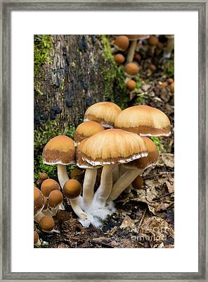 Framed Print featuring the photograph Mushrooms - D009959 by Daniel Dempster