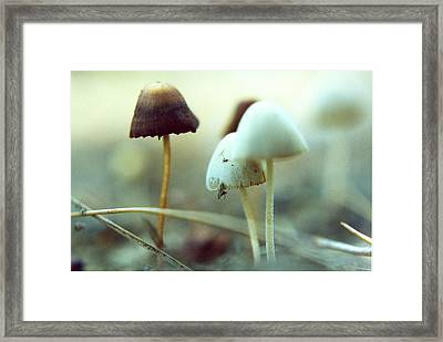 Mushrooms Framed Print by Don Youngclaus