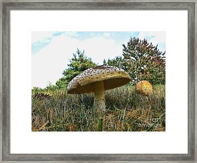 Mushrooms Framed Print by Edward Sobuta