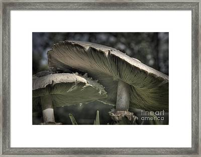 Mushrooms Framed Print by Fred Lassmann