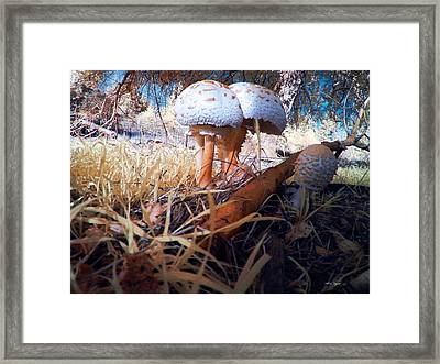 Framed Print featuring the photograph Mushrooms In The Grass by Chriss Pagani