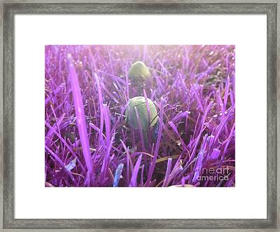 Mushrooms In The Park Framed Print by Jennifer Churchman