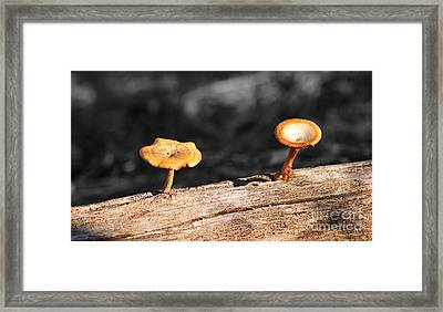 Mushrooms On A Branch Framed Print
