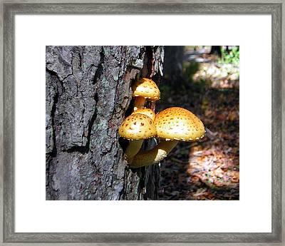 Mushrooms On A Tree Framed Print by George Jones