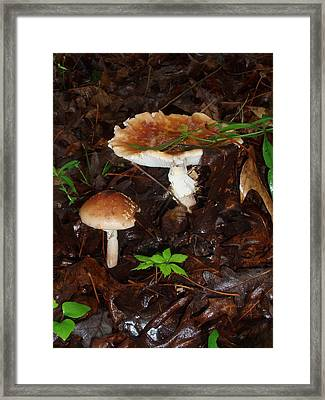 Mushrooms Rising Framed Print