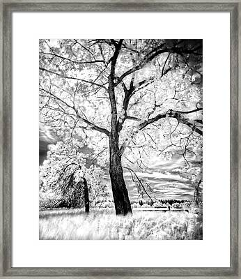 Framed Print featuring the photograph Music Moves The Soul by Dan Jurak