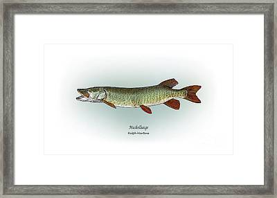 Muskellunge Framed Print by Ralph Martens