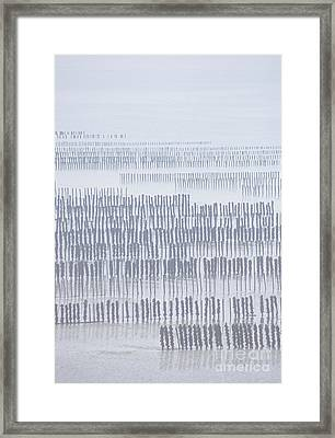 Mussel Poles In Shades Of Grey Framed Print
