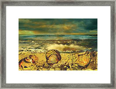 Mussels On The Beach Framed Print by Anne Weirich