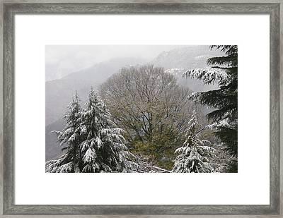 Mussoorie Winter 1 Framed Print by Padamvir Singh