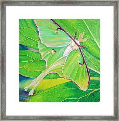 Must Be Dreaming Framed Print by Amy Tyler
