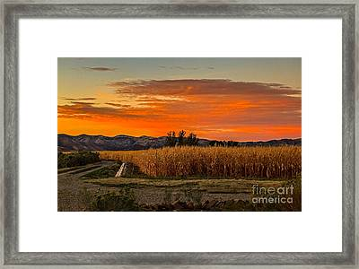 Must Be Fall Framed Print by Robert Bales