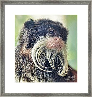 Mustache Monkey Watching His Friends At Play Framed Print by Jim Fitzpatrick