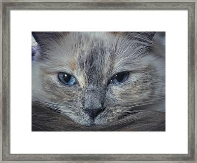 Mustachioed Cat Framed Print by Karen Stahlros