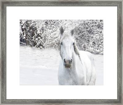 Mustachioed Merlin In White Framed Print