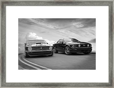 Mustang Buddies In Black And White Framed Print