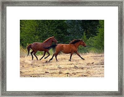 Mustang Gallop Framed Print by Mike  Dawson