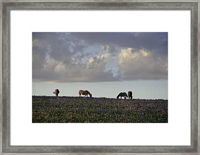 Mustang Group 17 Framed Print