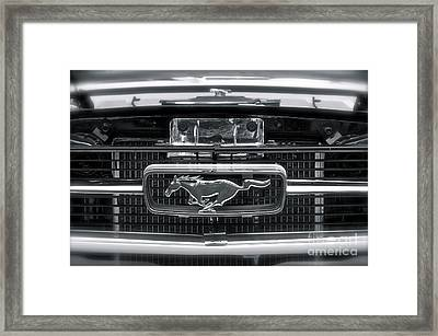 Mustang Framed Print by Gwyn Newcombe