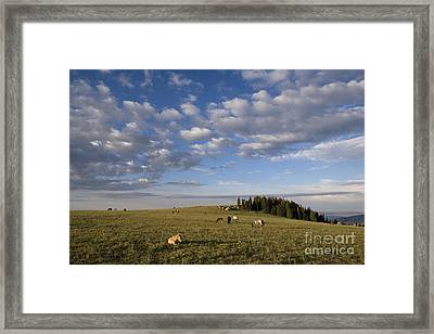 Mustang Herd Framed Print by Jean-Louis Klein & Marie-Luce Hubert