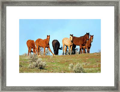 Mustang Herd Framed Print by Mike Dawson