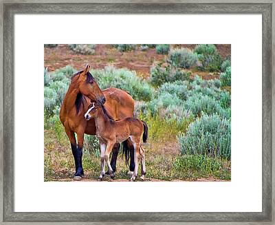 Mustang Horse And Foal Framed Print