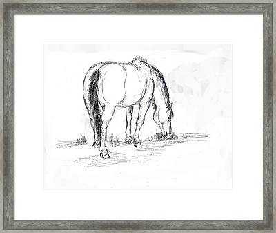 Mustang Mare Field Sketch Framed Print by Dawn Senior-Trask