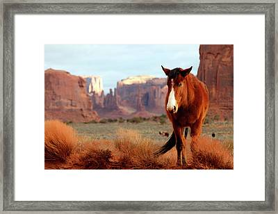 Framed Print featuring the photograph Mustang by Nicholas Blackwell
