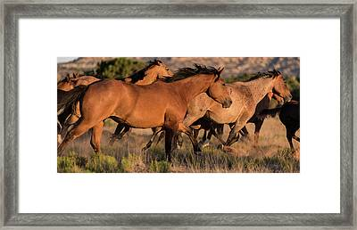 Mustang Run Framed Print by Steve Gadomski