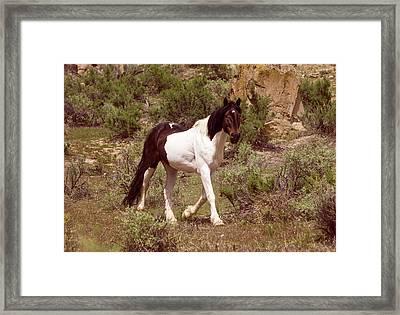 Mustang Stallion In Sage  Framed Print
