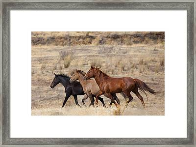 Mustang Trio Framed Print by Mike  Dawson