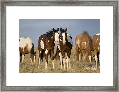 Mustangs Framed Print by Jean-Louis Klein & Marie-Luce Hubert