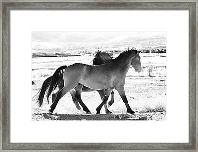 Mustangs Framed Print