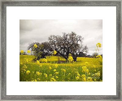 Framed Print featuring the photograph Mustard And Oaks by Leslie Hunziker