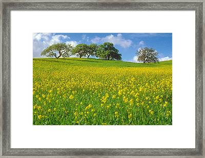 Framed Print featuring the photograph Mustard Field by Mark Greenberg